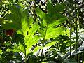 Dscn0490 japan nature.jpg