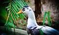 Duck MIX.jpg