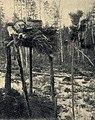 E. Pfitzenmayer, Sibirische Rauchwaren (1908) Gerüste mit verpackten Bärenschädeln.jpg