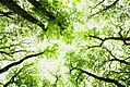 EU2017.EE brand image 16 trees.jpg