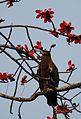 Eagle (3327873016).jpg