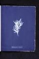 Ectocarpus crinitus (NYPL b11861683-419727).tiff