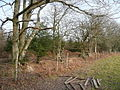 Edge of Pannelridge Wood - geograph.org.uk - 697702.jpg