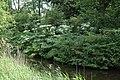 Eendracht, 1067 Amsterdam, Netherlands - panoramio (5).jpg