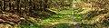 Eindeloze paden door uitgestrekte bossen. Locatie, Kroondomein.jpg