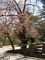 El Capricho - Jardín Artístico de la Alameda de Osuna - 38.jpg