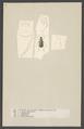 Elaphrus - Print - Iconographia Zoologica - Special Collections University of Amsterdam - UBAINV0274 001 01 0018.tif