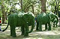 Elephants in St James's Park SW1 - geograph.org.uk - 1268824.jpg