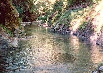 Elk River (Oregon) - Elk River flowing through the forest
