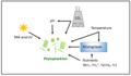 Environmental factors that affect phytoplankton productivity.webp