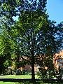 Ernst Thälmann Platz, Pirna DSC05399.jpg