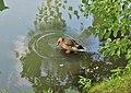 Et je fait des ronds dans l'eau, la la la ... - Love making rounds in the water. - panoramio.jpg