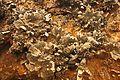 Exponate von der Mineralienausstellung ... 2H1A6852ОВ.jpg