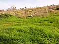 Ezor Lod, Israel - panoramio (6).jpg