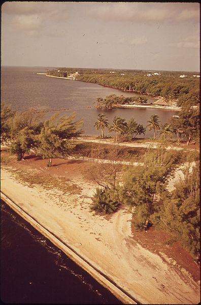 File:FLORIDA-NEAR MATHESON HAMMOCK, SOUTH OF MIAMI - NARA - 544554.jpg