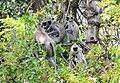 FLora and fauna of Chinnar WLS Kerala (62).jpg