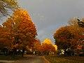 Fall in Madison - panoramio (16).jpg