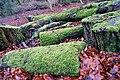 Fallen trees, Crawfordsburn Glen - geograph.org.uk - 655214.jpg