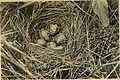 Familiar wild animals (1906) (14583079359).jpg
