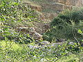 Fatzael Springs and water system 052.JPG