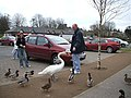 Feeding the birds - geograph.org.uk - 375538.jpg