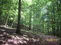Ferdinandea alberi.jpg