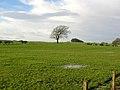 Field Beside Burnhouse Road - geograph.org.uk - 318410.jpg