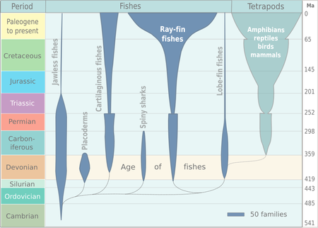 Spindle diagram for the evolution of vertebrates. The diagram is based on Benton (2005, p. 14). Fish evolution.png