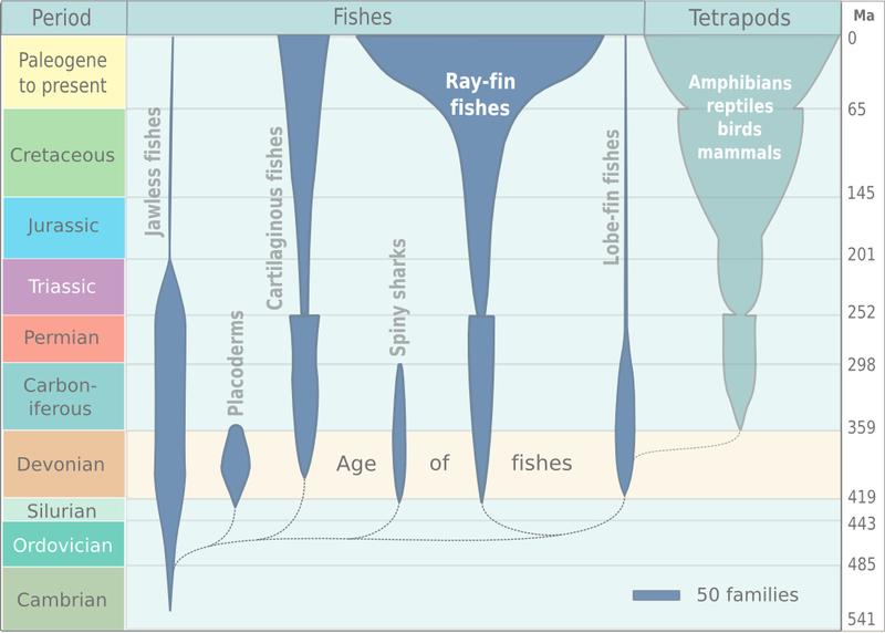 Fish evolution.png