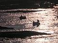 Fishermen Cauvery River Srirangapatna.jpg