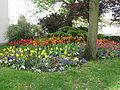 Fleurs au parc de l'Aulnaye.jpg