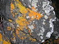 Flickr - brewbooks - Lichen Rock at Shipwreck Cove, NZ (3).jpg