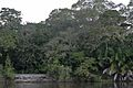Flickr - ggallice - Pantanal vegetation (2).jpg