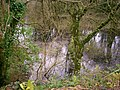 Flooded Disused Quarry, Trenewydd Lane, Llanteg - geograph.org.uk - 1169893.jpg