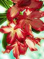 Flor en Olaya.jpg