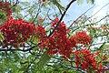 Flora of Sihanoukville 05.jpg