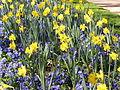Flores amarillas y moradas (427348945).jpg