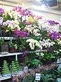 Flower Market Road IMG 5507.JPG