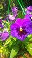 Flowers (05).jpg