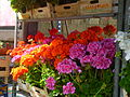 Flowers from napoli 05.JPG