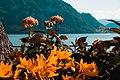 Flowers over Lake Lucerne.jpg