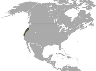 Fog shrew species of mammal