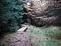 Footbridge in forestry at Mossy Bottom - geograph.org.uk - 275798.jpg