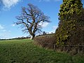Footpath, Ditcheat - geograph.org.uk - 1702563.jpg