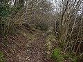 Footpath in Fewler Gate Wood - geograph.org.uk - 1104798.jpg