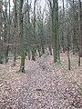 Footpath in Saville Wood, Thurstonland, Yorkshire - geograph.org.uk - 119445.jpg
