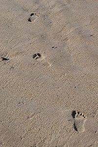 sandの意味 使い方 英和辞典 weblio辞書