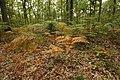 Forêt Départementale de Méridon à Chevreuse le 29 septembre 2017 - 38.jpg