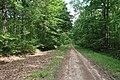 Forêt domaniale de Bois-d'Arcy 45.jpg