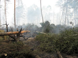 2010 Northern Hemisphere summer heat waves - Front end of forest forest-peat fire fighting near Roshal town (Shatursky district. 13 aug 2010)